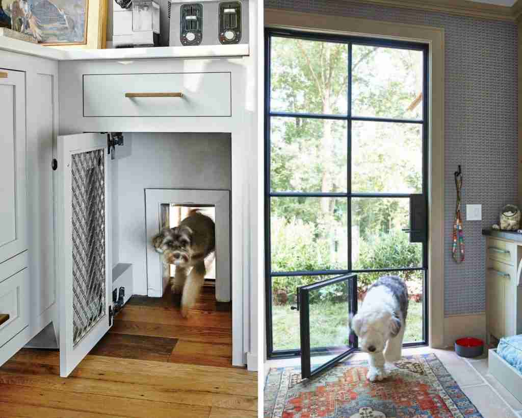 Innovative design for dogs